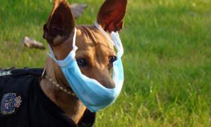 Пандемия COVID-19: когда собаки выгуливают хозяев