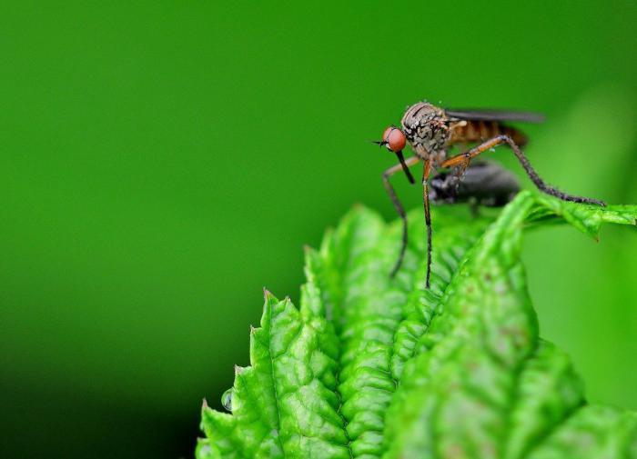 Комары способны выжить без критически важного гена