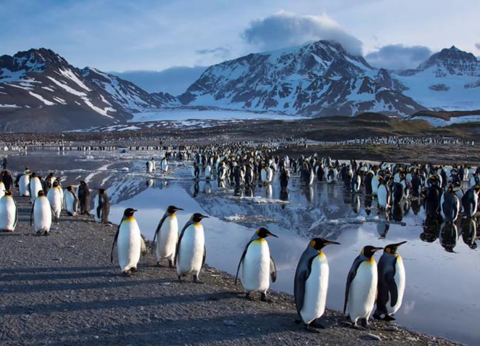 Кусто спрогнозировал скорое исчезновение пингвинов в Антарктиде