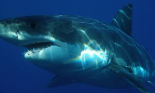 Палеонтологи обнаружили останки позвонков древней акулы