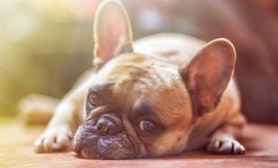 Наказания во время дрессировки собак вызывают стресс у животных