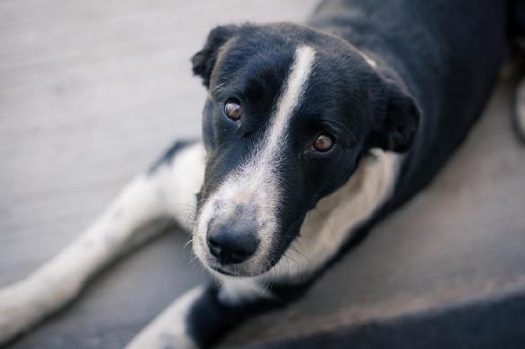 Больная бродячая собака обратилась за помощью к ветеринарам