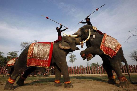 Боевые слоны - танки древности