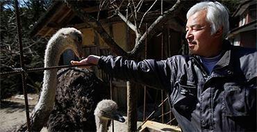 Любовь к животным вернула японского фермера в Фукусиму
