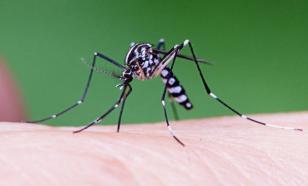 Во Флориде выпустят 750 миллионов генномодифицированных комаров