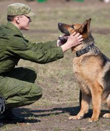 """Проверка у собаки таланта спасателя: """"поддельный обморок"""""""