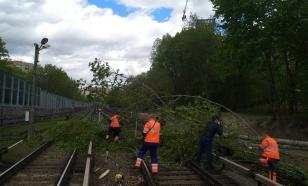 В Москве приостановили работу метро из-за упавшего дерева