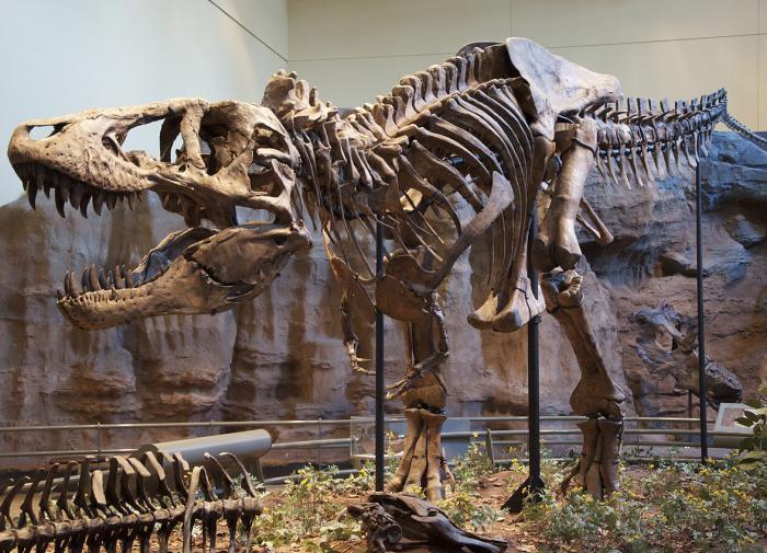 Палеонтологи из Нидерландов воссоздали походку тираннозавра