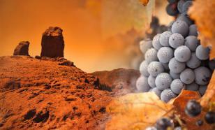 Грузия включилась в освоение космоса, предложив выращивать виноград на Марсе