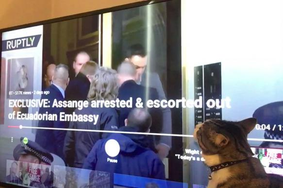 WikiLeaks опубликовал видео с котом Ассанжа
