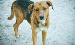 Собаки покусали двух детей в Южно-Сахалинске