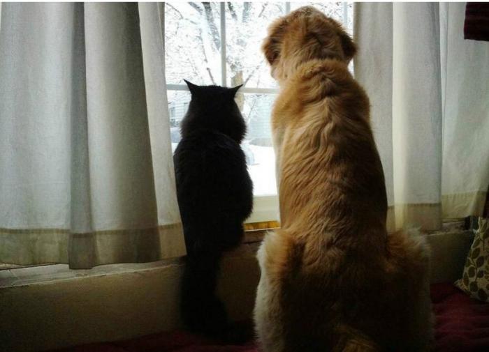 Какие полезные для человека продукты категорически нельзя кошкам и собакам