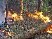 Германия готова помочь России в борьбе с лесными пожарами