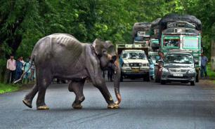 В Индии слон напал на туристов