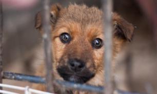 В Подмосковье направят 176 млн рублей на работу с бездомными животными