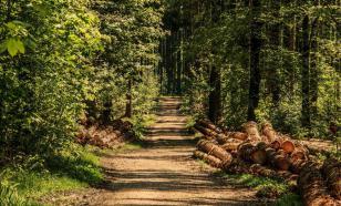 О чем молчат самые древние в мире деревья