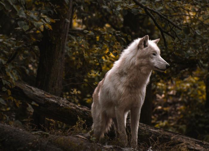 Охотовед рассказал об опасных обитателях подмосковных лесов