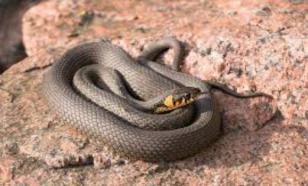 Подбираем змею с подходящим темпераментом