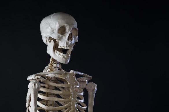 Пять фактов о скелете: об этом не расскажет учебник