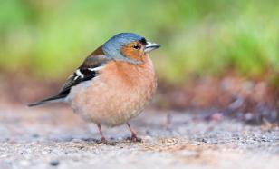 Эксперт рассказал о роли перелётных птиц в распространении коронавируса