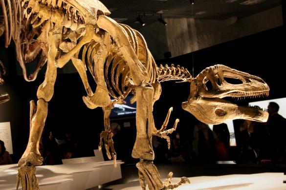В Аргентине обнаружили останки мегараптора возрастом 70 млн лет
