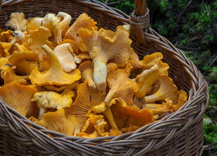 Почему в России верят в штрафы за грибы и одуванчики