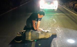 В Таиланде спасатель спас слонёнка, сделав ему искусственное дыхание