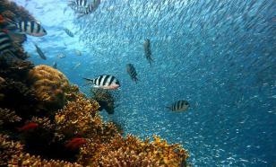 Морские экосистемы можно восстановить к 2050 году