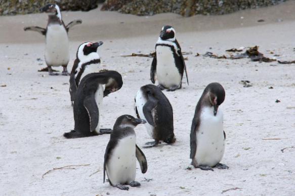 РФ подозревают во вмешательстве в выборы птицы года в Новой Зеландии