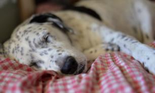 Совет зоопсихолога: главный запрет - собаке вред. ВИДЕО