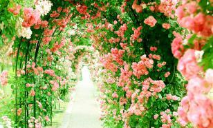 Цветущие арки: просто, доступно, красиво