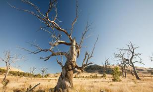 В Австралии погибли волонтёры, боровшиеся с лесными пожарами