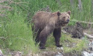 На Колыме геолог погиб от укусов дикого медведя