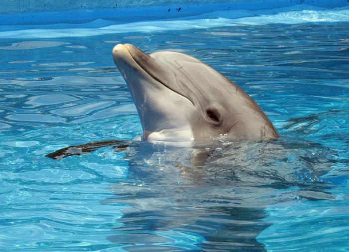 В России хотят запретить добычу дельфинов и китов