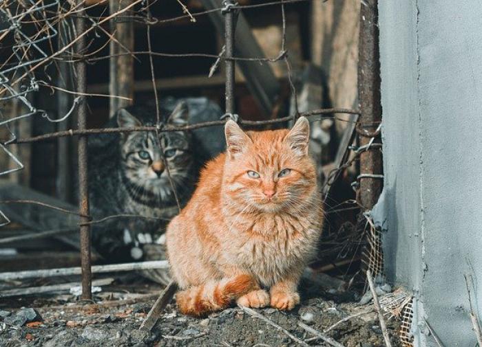 В Петербурге откроют два госприюта для кошек и собак
