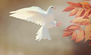 Создан дрон, способный летать, как птица