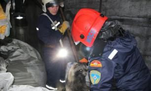 На Цинковом заводе в Челябинске обнаружили енота