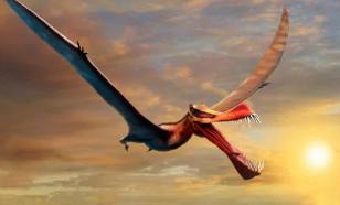 Найденный учёными новый вид птерозавра — копия сказочного дракона