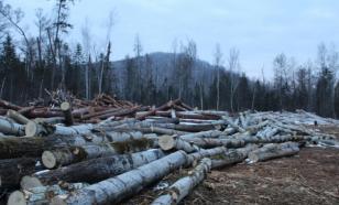 В Пермском крае мужчина незаконно рубил деревья в особо крупном размере
