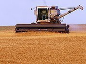Сельское хозяйство выживает вопреки всему
