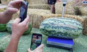 Самый большой арбуз России весит почти 50 кг