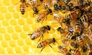 """В Башкортостане возрождают """"колодное"""" пчеловодство"""