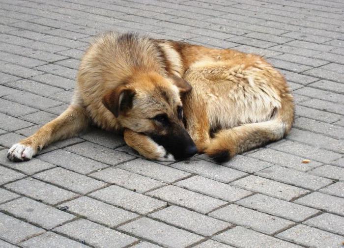 В Краснодарском крае живодер расстрелял собаку