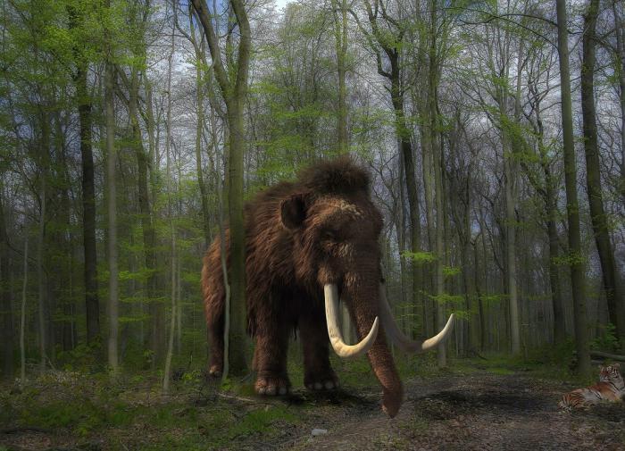 В сибирском озере обнаружили скелет шерстистого мамонта