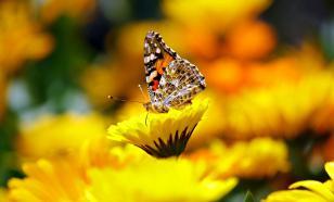 США удалось избежать глобального сокращения численности насекомых