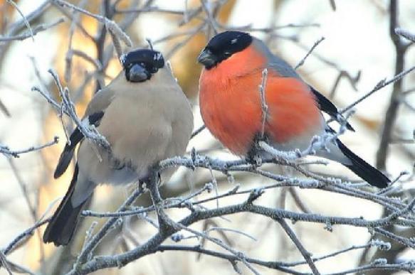 Опубликованы правила подкармливания птиц зимой