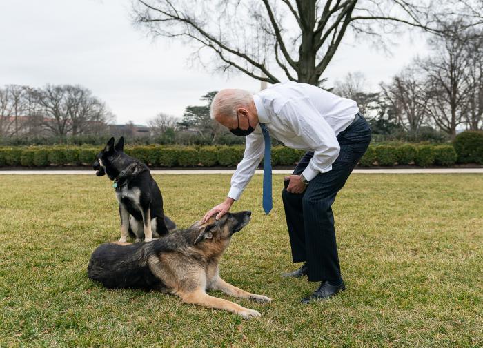 Инцидент в Белом доме разлучил Байдена и его собак