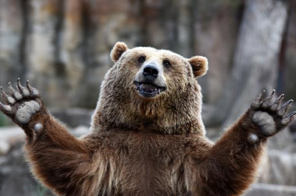 На Камчатке закрыли туристический маршрут из-за голодных медведей