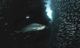 Наши рыбаки не жалуют Мировой океан