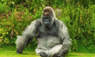 Зоологи назвали животных, которые могут заразиться COVID-19